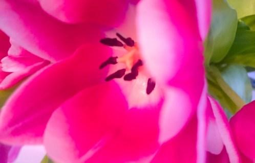 Katia Bernhard PR Marketing Kunst Blume