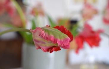 Katia Bernhard PR Marketing Tulpe rot Blumen rot