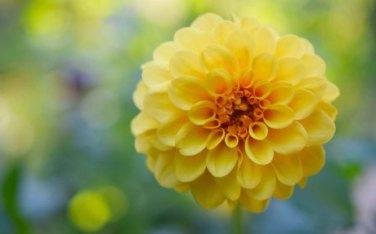 Katia Bernhard PR Marketing Blumen neu pflanzen